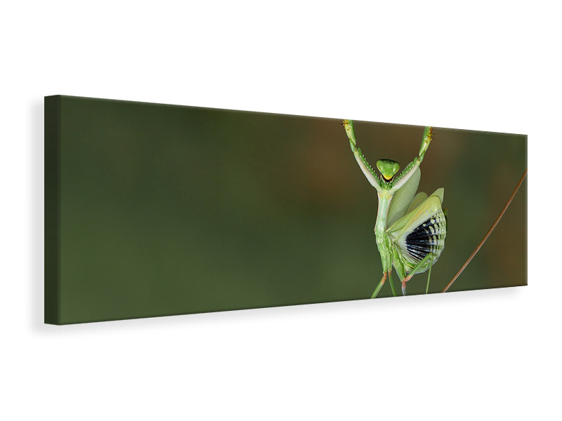 Panoramic Canvas Print Are You Gonna Dance With Me