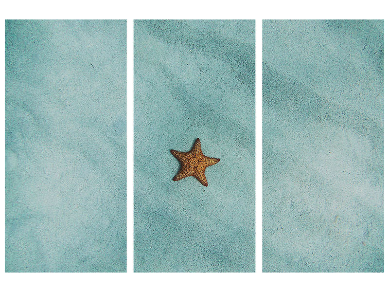3 Piece Canvas Print The little starfish
