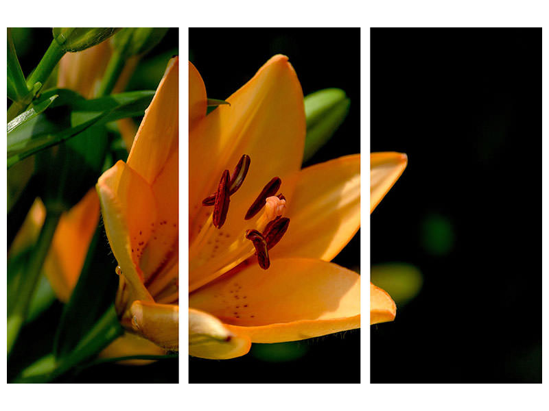3 Piece Canvas Print Close up lily in orange