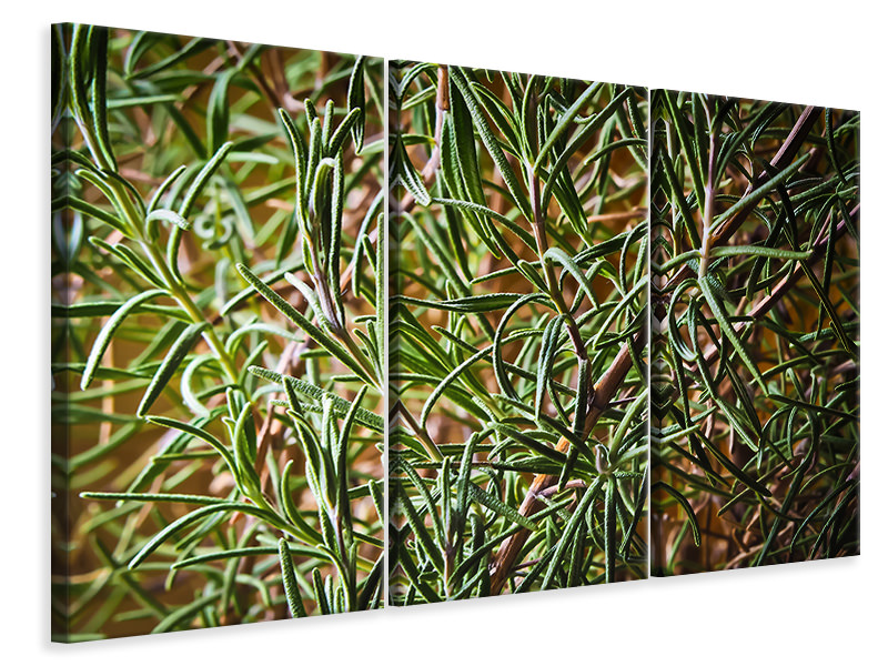 3 Piece Canvas Print Rosemary XXL