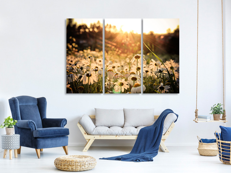 3 Piece Canvas Print Daisies At Sunset