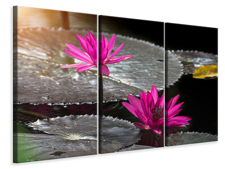 3 Piece Canvas Print Water Lily In The Morning Dew