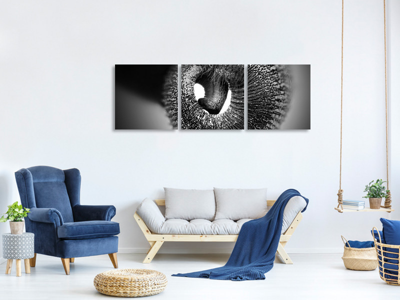 Panoramic 3 Piece Canvas Print Trunk