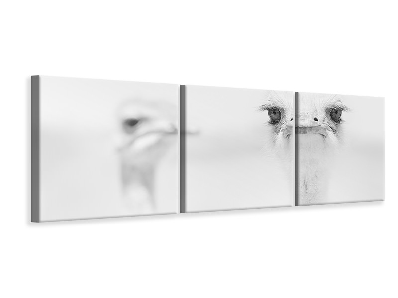 Panoramic 3 Piece Canvas Print Funny Ostrich