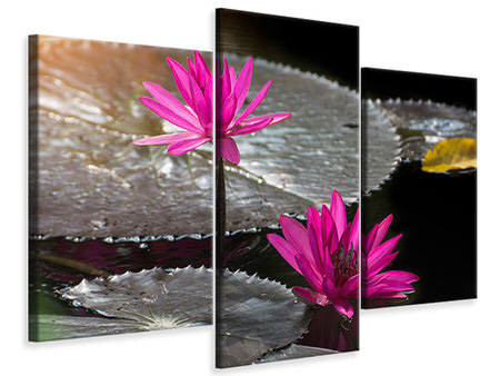 Modern 3 Piece Canvas Print Water Lily In The Morning Dew