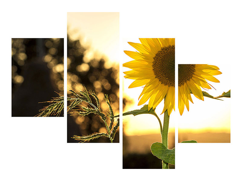 Modern 4 Piece Canvas Print Sunflower in the sunrise
