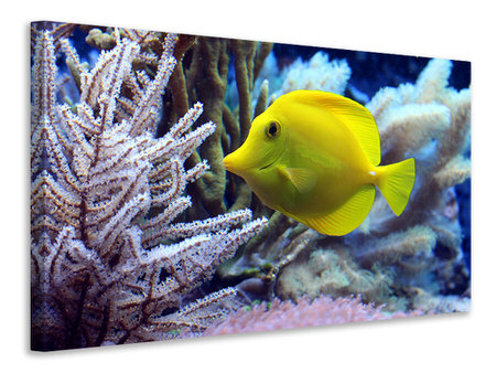 Canvas print Yellow doctor fish XL
