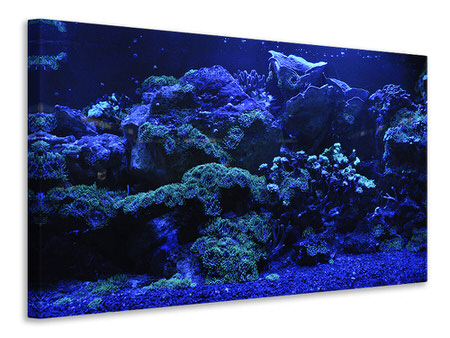 Canvas print Coral reef in blue