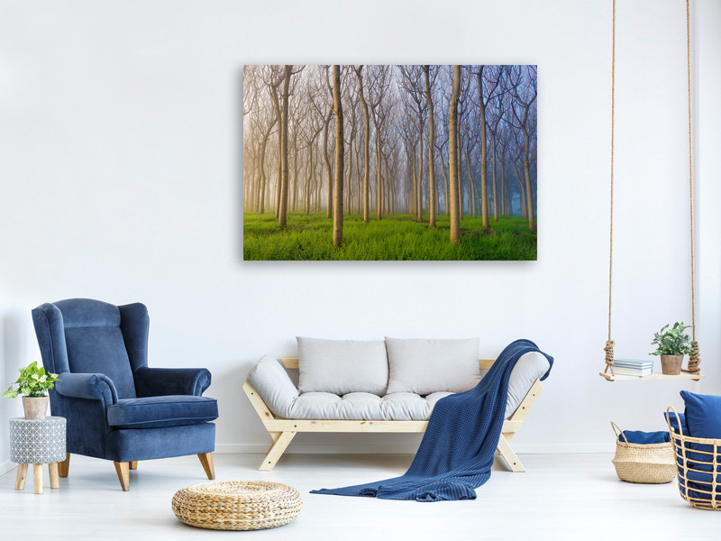 Canvas print Morning Of The Forest