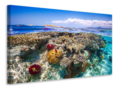 Stampa su tela Mayotte - the Reef