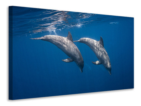 Stampa su tela Two Bottlenose Dolphins