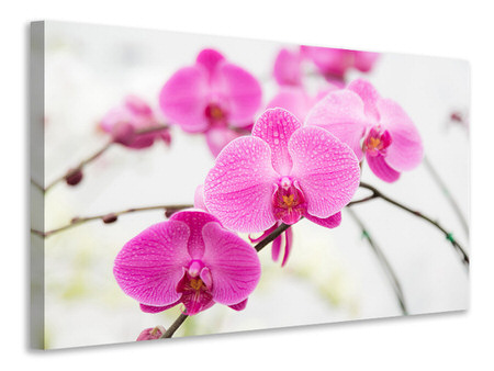 Canvas print The Symbol Of Orchid