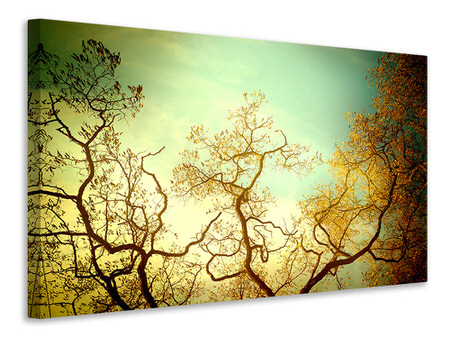 Canvas print Autumn Trees