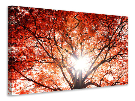 Canvas print Light Of Autumn
