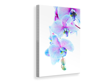 Canvas print Orchid Butterfly